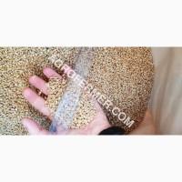 Семена пшеницы сорт FOX канадская трансгенная двуручка
