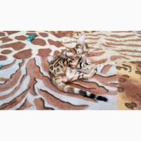 Продажа бенгальских котят из питомника Украина