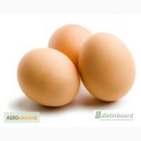 Реализуем инкубационные яйца мясо-яичных пород