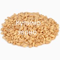 Купуємо пшеницю фуражну також 3клас