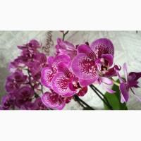 Орхидеи и другие комнатные растения и все для них