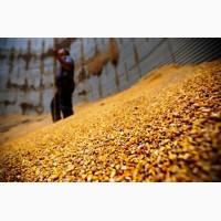 Кукуруза 50000 тн FOB Черное море