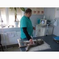 Ветеринарные услуги. Клиника ЗооДоктор, Харьков