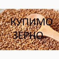 Компанія на постійній основі закуповує пшеницю фуражну, в великих обсягах