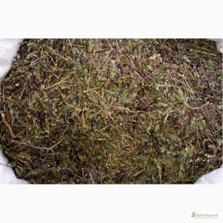 Очанка трава купить