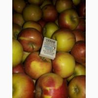 Яблоко несколько сортов от производителя