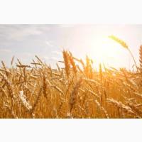 Закупка зернових