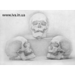 Уроки в школе рисования в Днепропетровске
