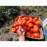 Продам томатгрунтовой
