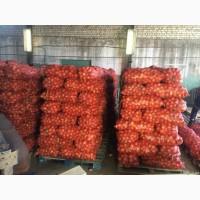 Оптом лук товарный в сетках