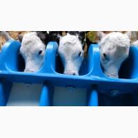 Сухое молоко заменитель цельного для телят и поросят