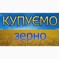 Закупляємо зерно пшениці 2-3кл. по Тернопільській області