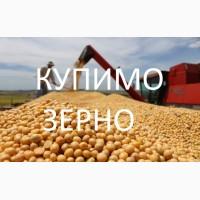 Закупляємо сиру сою у виробників та посередників, по Рівненській області