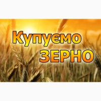 Закупимо пшеницю постійно у сільгоспвиробників