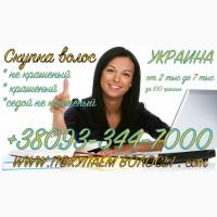 Продать волосы в Одессе дорого Куплю волосы дорого Одесса Массовая скупка волос