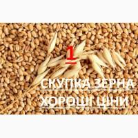 Закуповуємо пшеницю 2 кл, 3 кл, та фураж відповідно до Держстандарту