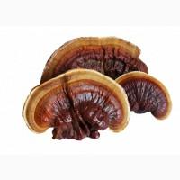 Продам грибы шиитаке, намеко, рейши