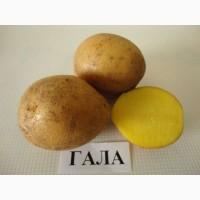 Продаем семенной картофель Гала I репродукции. Отправка по всей Украине