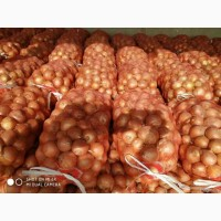 Продам лук калиброваный крупный