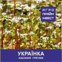 Гречка Українка для повторних посівів