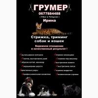 Грумер Харьков - Песочин, Стрижка собак и кошек