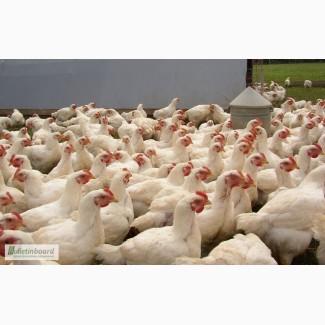 Комбікорма для птиці (бройлери, несучки, гуси, качки, індики) ТМ Шенкон