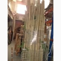 Бамбук декоративный в хорош сост