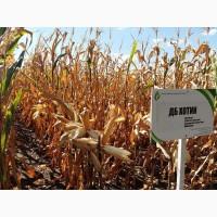 Продам семена кукурузы ДБ Хотын ФАО 250