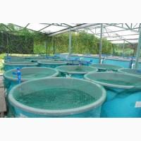 Строителство ферм по разведению рыбы, раков, креветок
