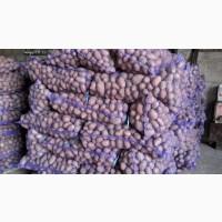Картошка оптом со склада фермерского хозяйства