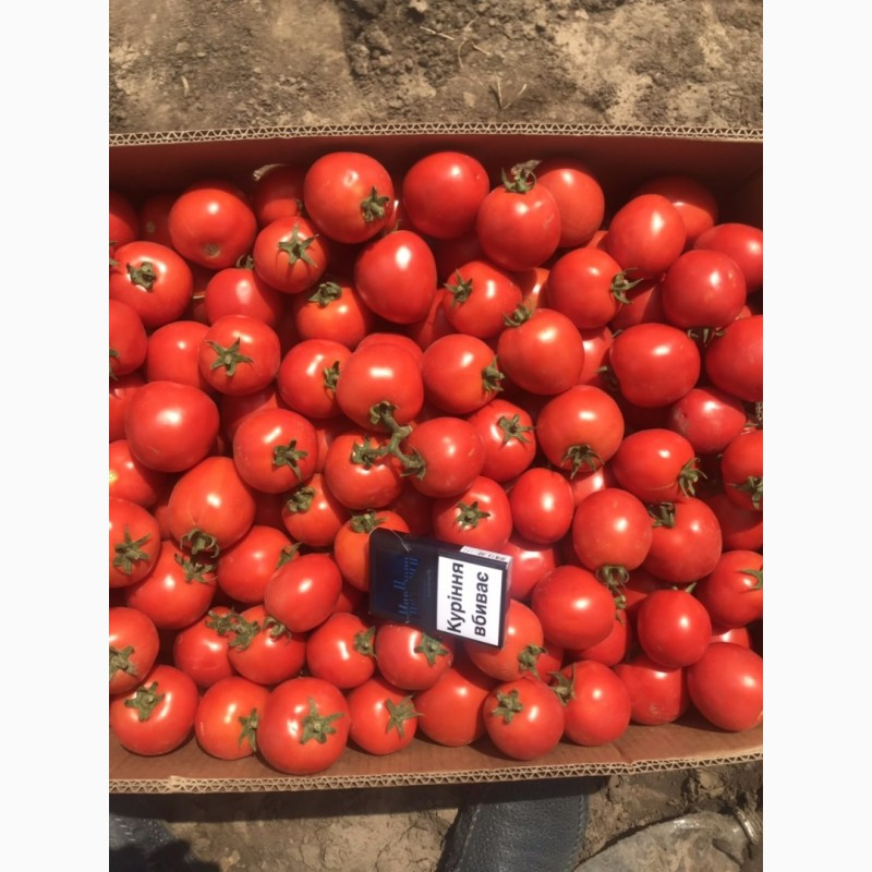 Фото 3. Продам помидор оптом