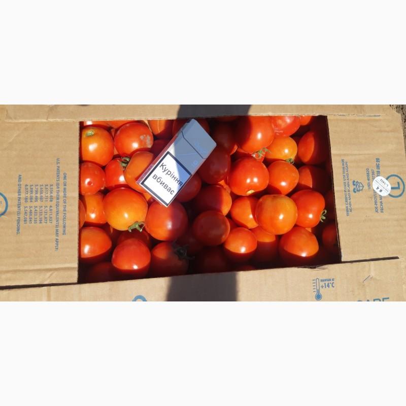 Фото 5. Продам помидор оптом