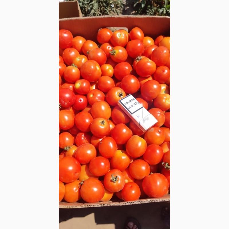 Фото 7. Продам помидор оптом