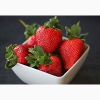 Полуниця Дарселект (Darselect Strawberry) саджанці полуниці Фріго