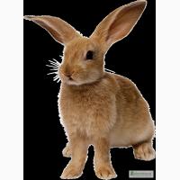Комбикорм гранулированный, корм, для кроликов в Одессе тм «МаксимуМ»