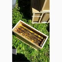 Пчелопакеты с доставкой по всей Украине, карпатка 4р