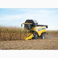 Уборка кукурузы. Аренда комбайна New Holland. Уборка кукурузы комбайно