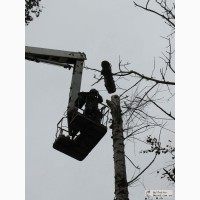 Удаление деревьев Киев 466 59 42 Спил деревьев Киев. Корчевание