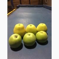 Продам яблука, в асортименті