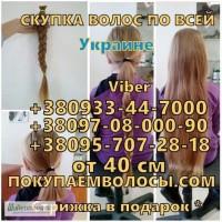 Продать волосы в Виннице и области дорого Купим волосы дороже всех