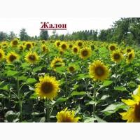 Продаємо Жалон насіння гібриду соняшнику