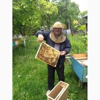 Пчелопакеты - Бджолопакеты с доставкой по Украине 2019 (карпатка и Степная украинская)
