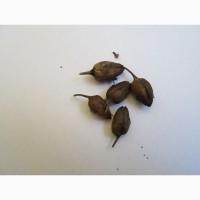 Табак ферментированный лапша 1-2мм.СЕМЕНА-20грн больше 2000 семян
