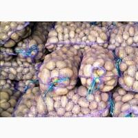 Продам картошку в наличии есть