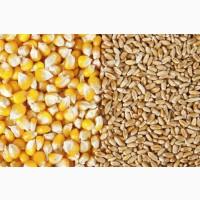 Куплю кукурузу, фуражную пшеницу, сою
