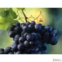 Кольцо для подвязки виноградной лозы и других растений