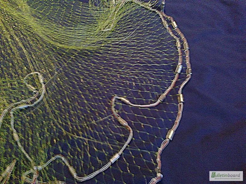 река найти фотографию вьетнамка в рыболовных сетях петухи как