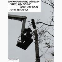Кронирование деревьев Киев. Обрезка веток. Удаление деревьев
