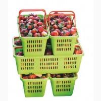 Лубянки пластиковые на 2 ручки для сбора ягод малины, клубники, голубики (ПОЛЬША)