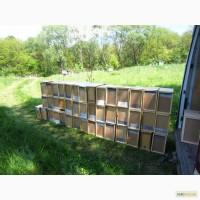 Пчелопакеты на весну 2019 года с доставкой